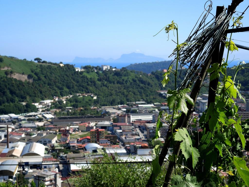 La Vigna che guarda Capri e Nisida