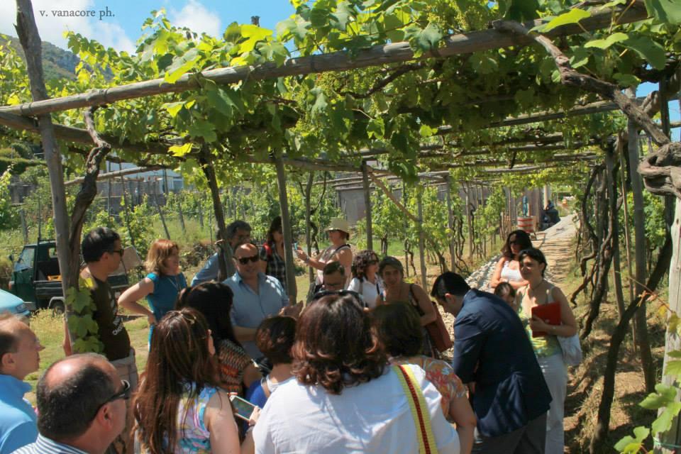 vigne Joaquin dell'Isola