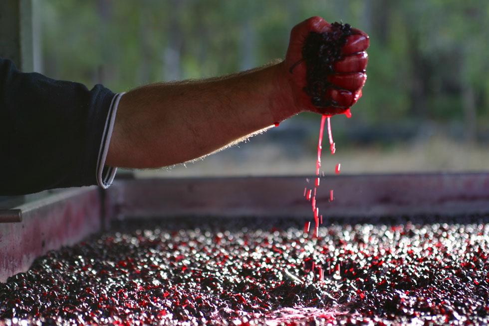 uva-fermentazione-vino