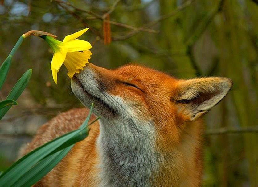 springfox